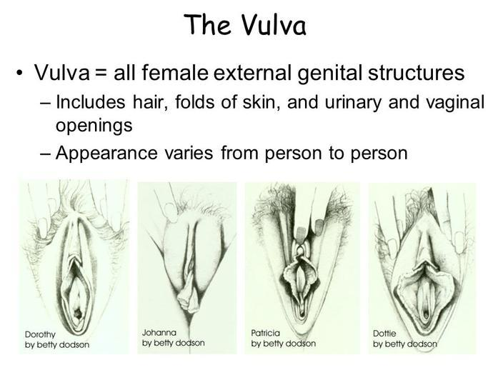 poll. what's your type of vulva? - girlsaskguys, Human Body