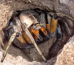 What Would You Do If You Found This Spider In Your House?