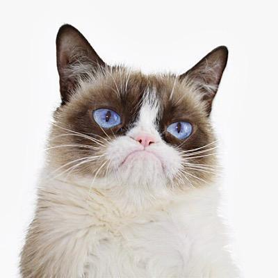 Does anyone remember  the grumpy cat?