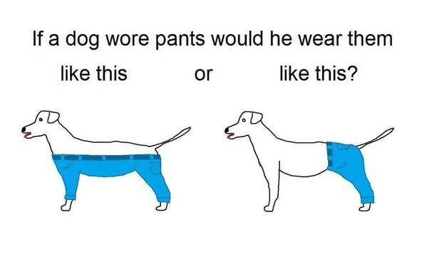 If a dog should wear pants, how should it wear them?