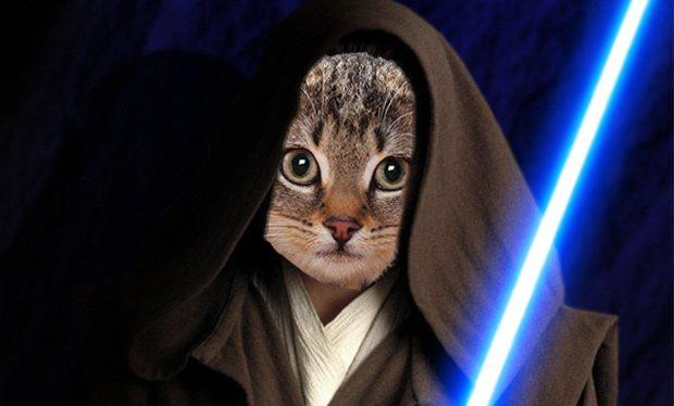 Is there anything you wish to ASK JEDI CAT?