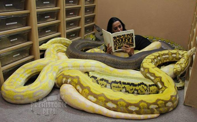 what is the coolest snake in the world girlsaskguys