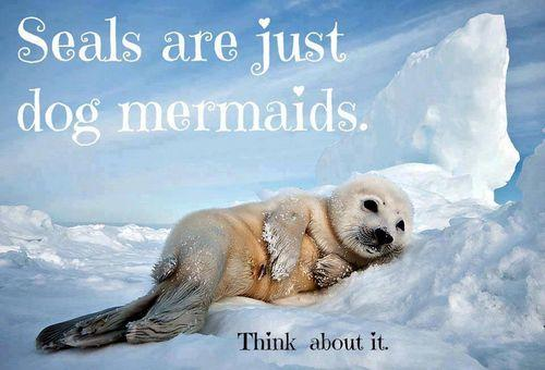 Agree or disagree: Seals are just dog mermaids?