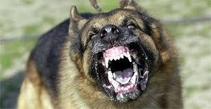 If  your pet dog starting displaying it's teeth and growling,  what's the best way to deal with it?
