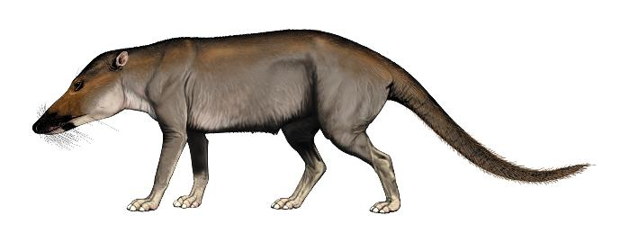 What living group of placenta mammals does this prehistoric one belong to?