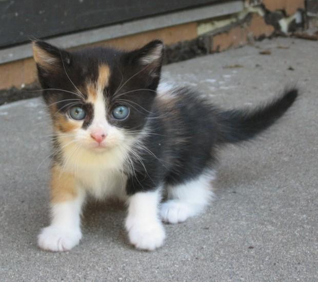 What would you name your kitten?
