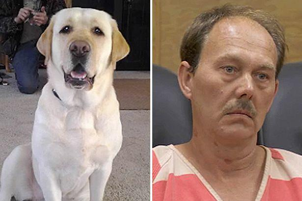 Poll: Do you think that Christopher W Dillingham should have been charged with animal abuse after blowing up his dog?