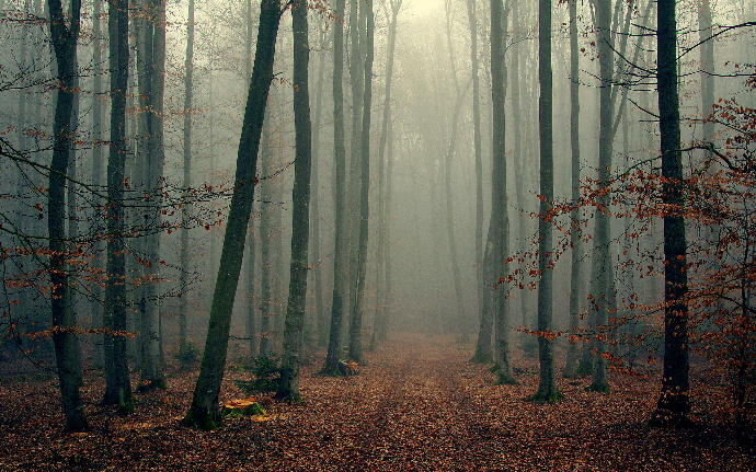 Which woods would you prefer to take a stroll by yourself in:) ?