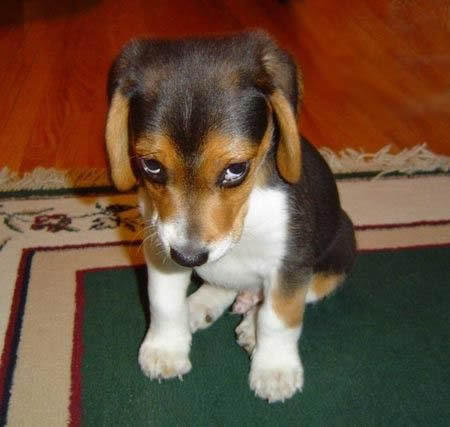 why does this dog look so sad?