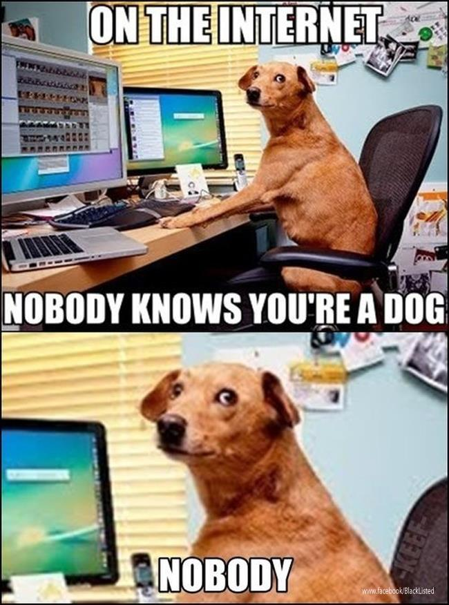 Are there any dogs browsing this site currently?