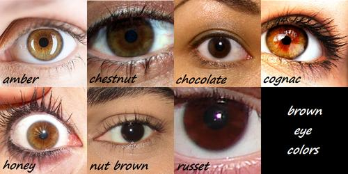 Which is the most common shade of brown eyes?