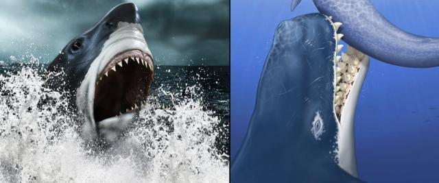 Who do you think has the more intimidating set of jaws, Megalodon (right) or Livyatan (Left)?