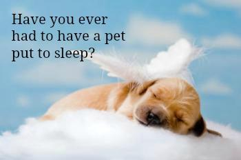 Have you ever had to have a pet put to sleep?