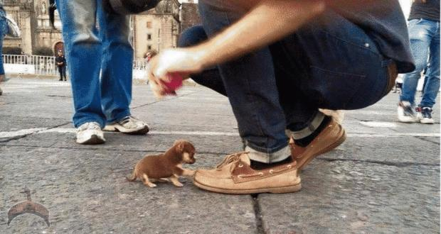 Would you step on this puppy for 18 billion USD?