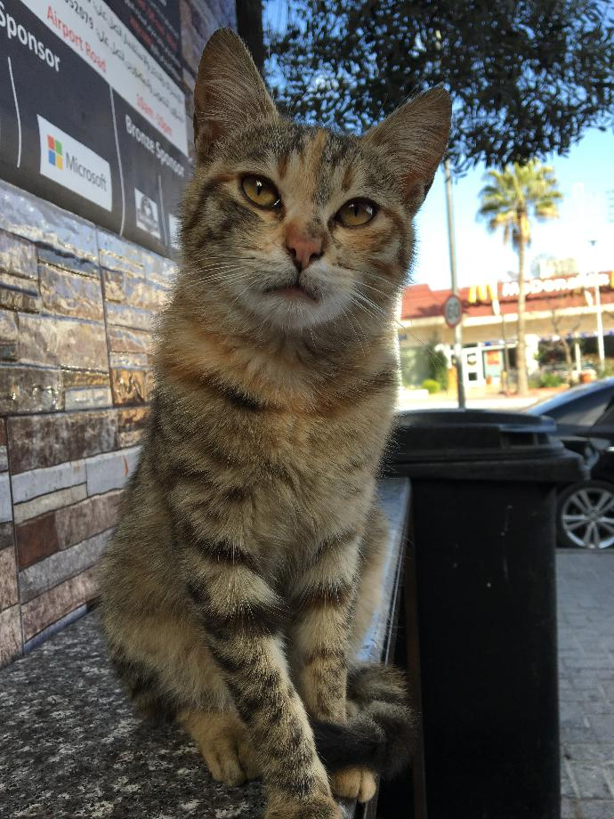 Maw meow i look?