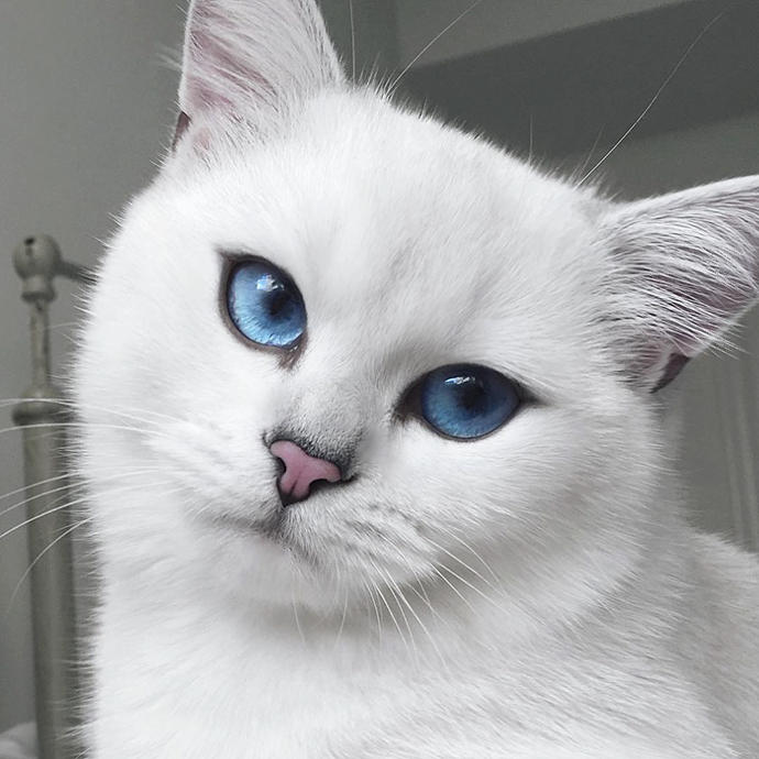 Do you wish your eyes were this amazing?