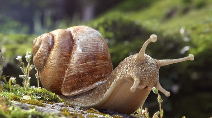 What are snails even trying to do?