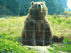 Would you rather be attacked by a big bear or a swarm of bees?