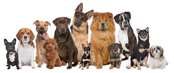 What's your favorite dog breed?