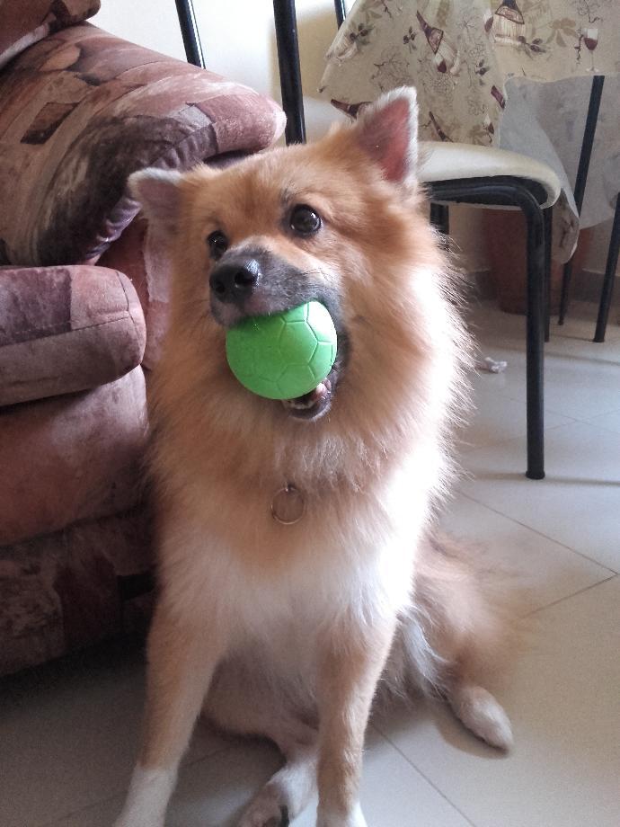 Is my dog  cute?