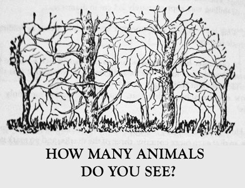 How many animals do you see 😏?