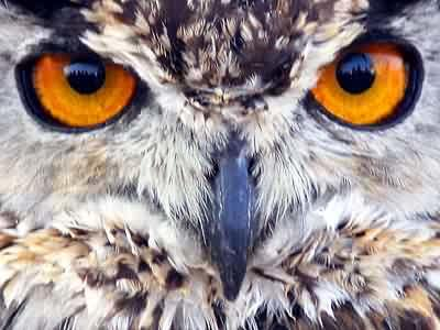 Do you ever think owls are like bird versions of cats?