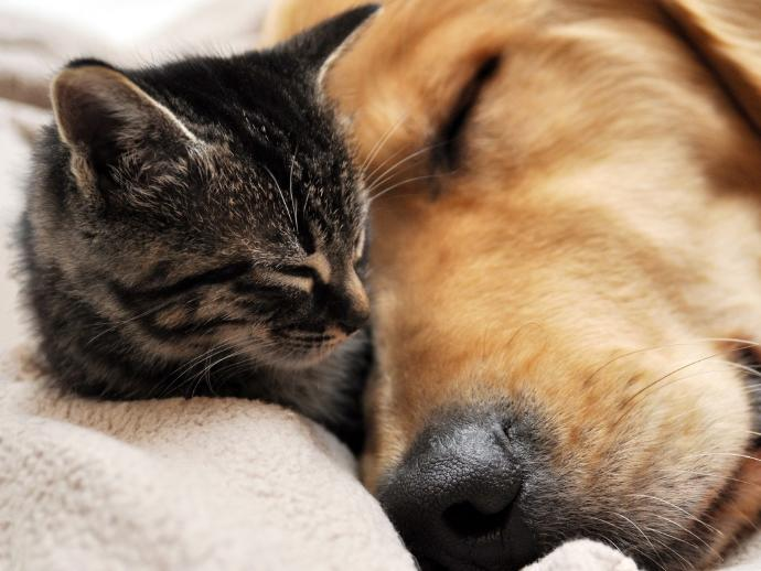 Do you view cats and dogs as opposites?