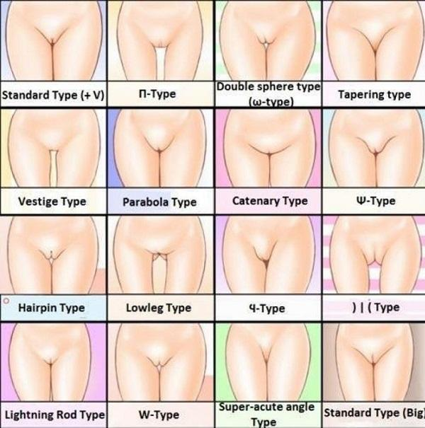 Girls, mons veneris and pussy. what type you have? Guys, what type from below you like most?