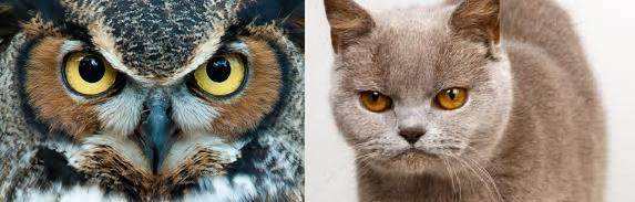 Did you ever notice that owls are like bird versions of cats?