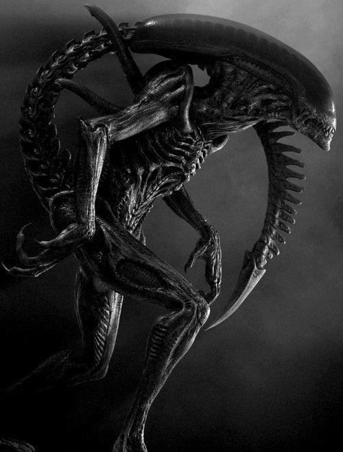 Would you rather get killed by Alien or Predator?