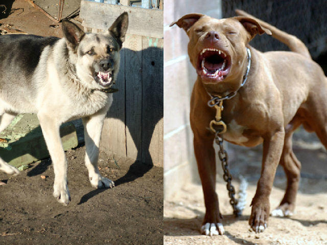 QUIZ: (again lol) Which Dog Are You Like When You're Angry?