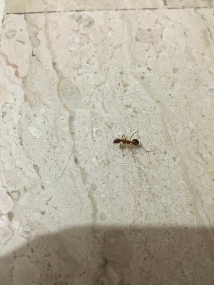 Guys how can I get rid of these ants help?