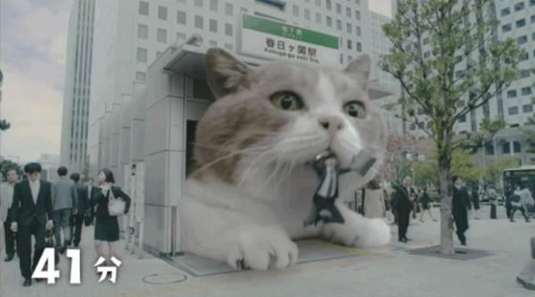 What would you do if your city was invaded by a Giant Cat?