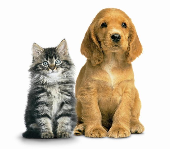 Dog owners, what would you do if your Dog turned into a cat for a day? Cat owners ,what would you do if your Cat turned into a Dog for a day?