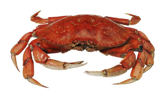 Who agrees that crabs are gross?