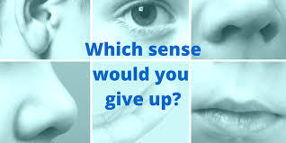 If you had to live without ONE sense for a year, which would you choose?