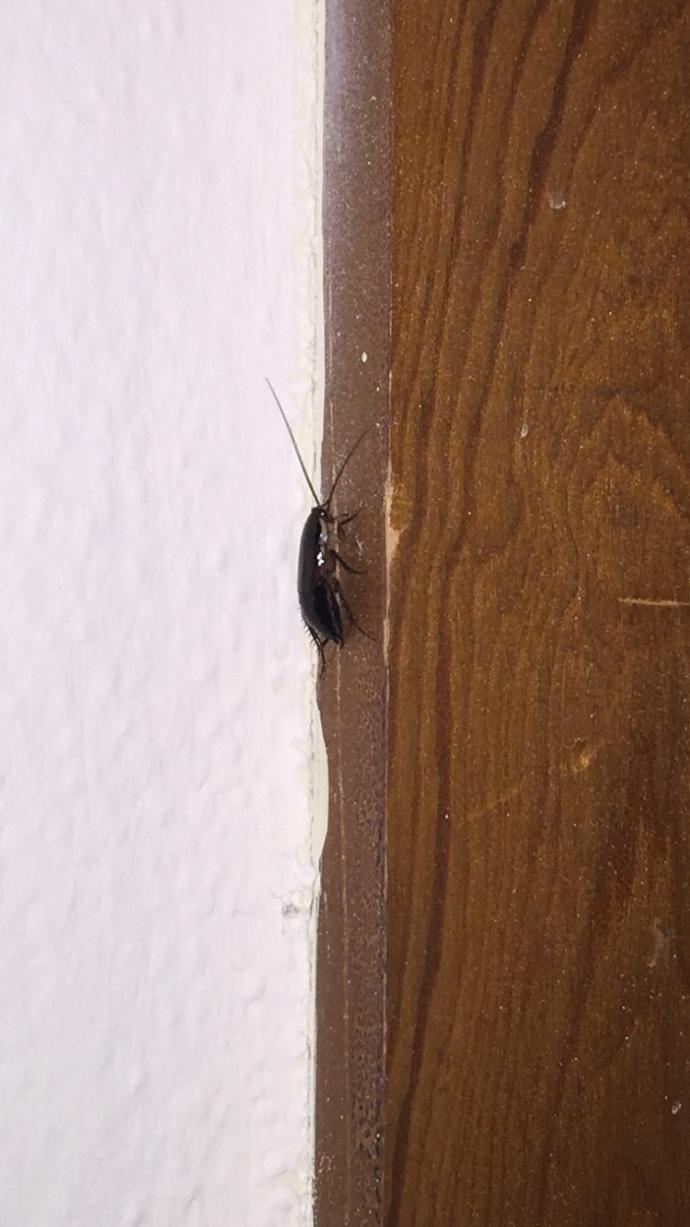 Does anyone know what kind of bug this is?