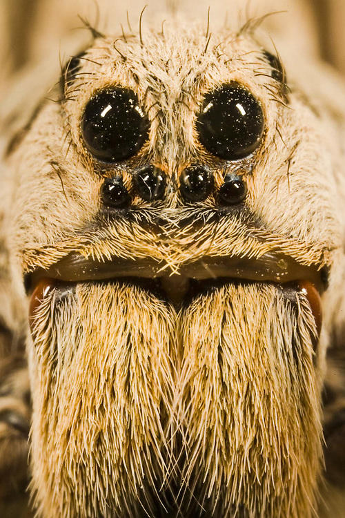 How would you feel if you encounter a human being with the the exact face of a spider and charges after you?