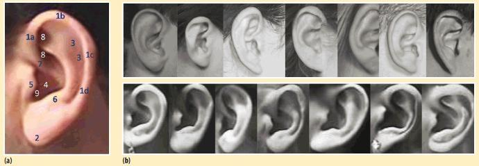 Do you have ears preference?