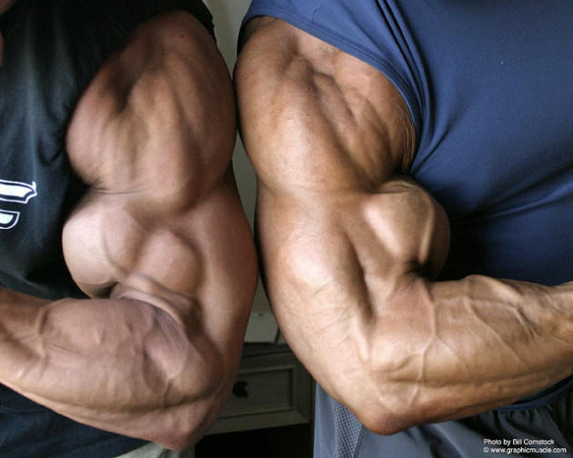 Girls , which muscles are most attractive on a guy?