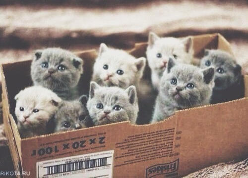 What would you do if you see a box of kittens in front of your door?