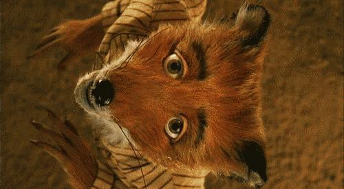 Do you like foxes?