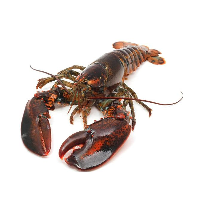Which do you prefer, Maine or Florida lobster?