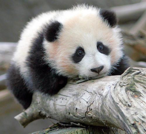 What makes you a sad panda 🐼?