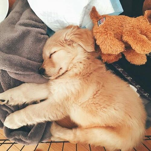 rate this cute little puppy (not mine)?