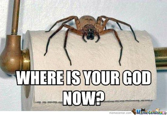 You are in the bathroom,  and you see this spider. Where is your god now?