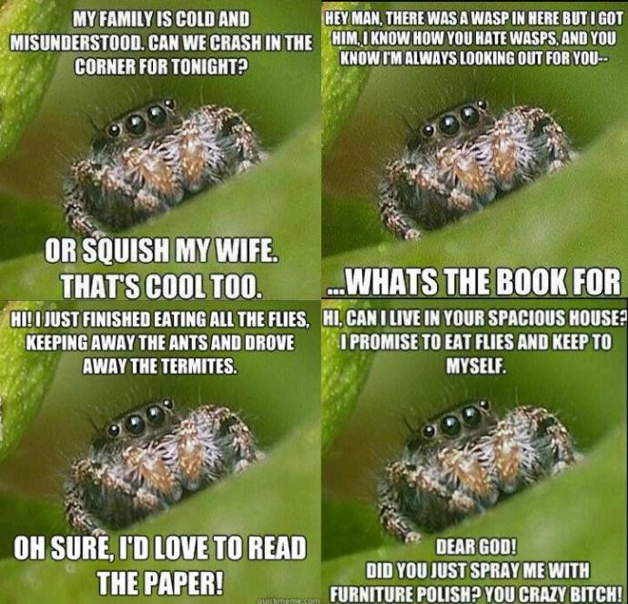 Do these images make you think of spiders differently?