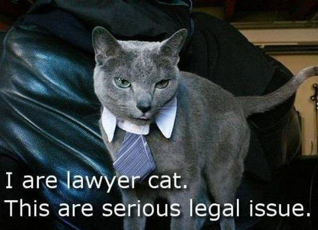 How would you feel if you were accused of a crime and Lawyer Cat took on your case?