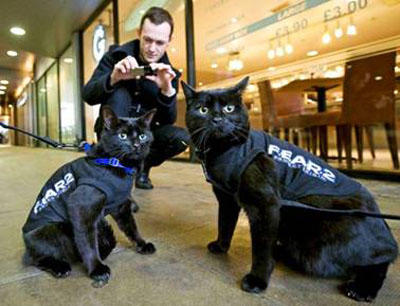 Would you be worried if the police employed cop Cats instead of dogs?
