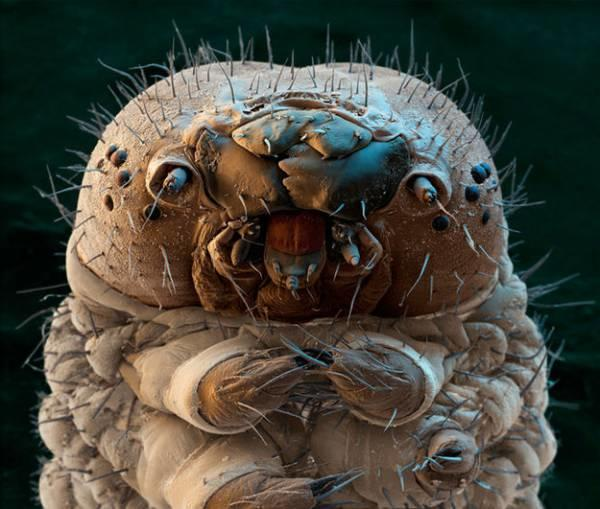 How would you feel if you found out that at least 500 of these creatures were living on you right now?